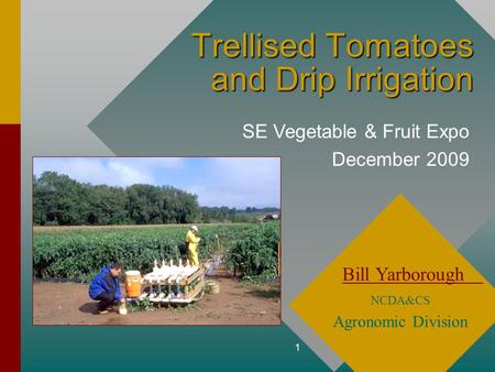 1 Trellised Tomatoes and Drip Irrigation Bill Yarborough NCDA&CS Agronomic Division SE Vegetable & Fruit Expo December 2009.