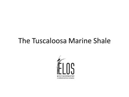 The Tuscaloosa Marine Shale. What Is The Tuscaloosa Marine Shale? The Tuscaloosa Marine Shale (TMS) is a sedimentary rock formation that consists of organic-rich.
