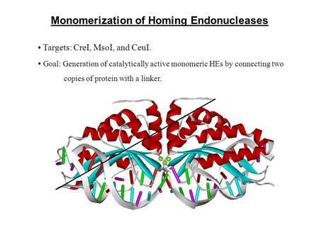 Monomerization of Homing Endonucleases Targets: CreI, MsoI, and CeuI. Goal: Generation of catalytically active monomeric HEs by connecting two copies of.