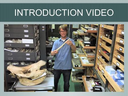 INTRODUCTION VIDEO. BONES TEST YOUR KNOWLEDGE... How many bones make up the Skeletal System?