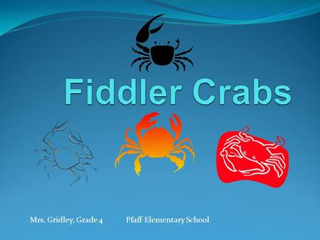 Mrs. Gridley, Grade 4Pfaff Elementary School. What Do You Think About Fiddlers? Where do they live? Do you think their habitat has salt or fresh water?
