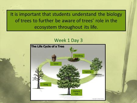 How to Measure & ID Week 1 Day 3 It is important that students understand the biology of trees to further be aware of trees' role in the ecosystem throughout.