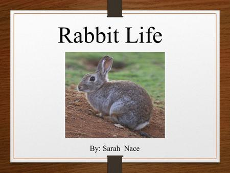Rabbit Life By: Sarah Nace. What does my animal look like? Rabbits have brown fur There size is 38-45cm There length is8 ¼-18 ¼ They have a short white.