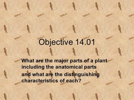 Objective 14.01 What are the major parts of a plant including the anatomical parts and what are the distinguishing characteristics of each?