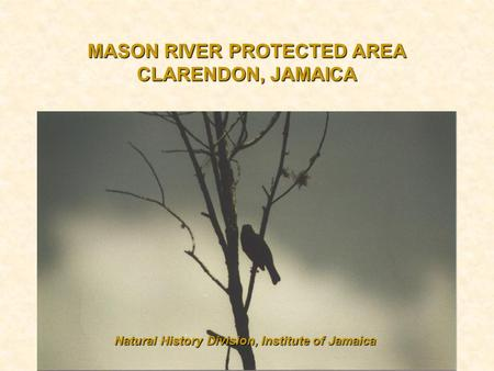 MASON RIVER PROTECTED AREA CLARENDON, JAMAICA Natural History Division, Institute of Jamaica.