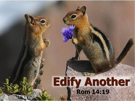 1 Edify Another Rom 14:19. Paul's Admonition Rom 14:19 (NKJV) …Let us pursue the things which make for peace and the things by which one may edify another.