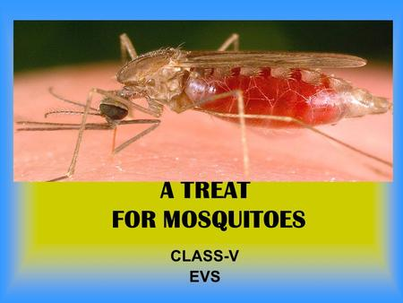 A TREAT FOR MOSQUITOES CLASS-V EVS.