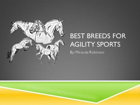 BEST BREEDS FOR AGILITY SPORTS By: Miranda Robinson.
