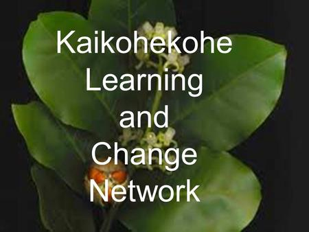 Kaikohekohe Learning and Change Network. Kaikohekohe To prepare for the future we must honour the past History reveals that the name Kaikohe came from.