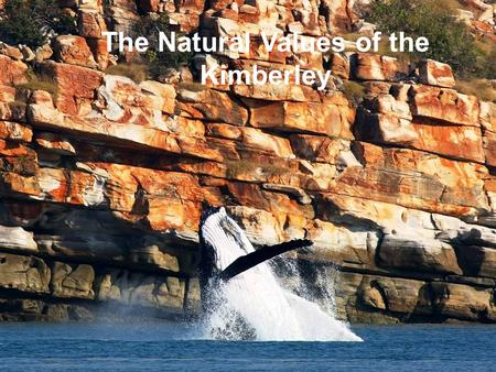 The Natural Values of the Kimberley. Introduction This section of the eNGO presentation will talk briefly regarding the natural values of the Kimberley.