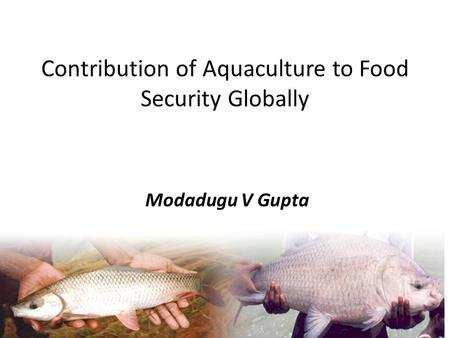 Contribution of Aquaculture to Food Security Globally Modadugu V Gupta.