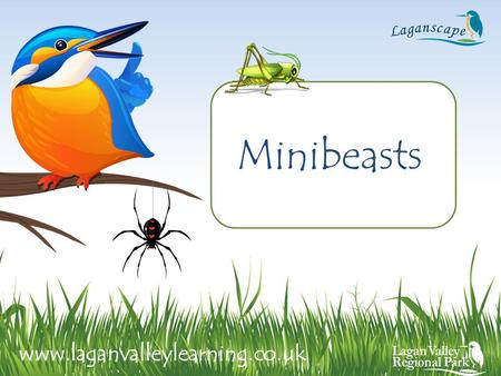 Minibeasts www.laganvalleylearning.co.uk. What is a minibeast? A minibeast is a small animal or 'creepy crawly'. Minibeasts have no backbone. Minibeasts.