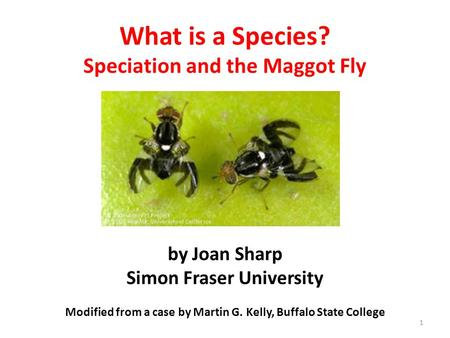What is a Species? Speciation and the Maggot Fly by Joan Sharp Simon Fraser University Modified from a case by Martin G. Kelly, Buffalo State College.
