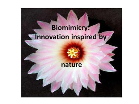 Biomimicry: Innovation inspired by nature. Biomimicry is the science and art of emulating Nature's best biological ideas to solve human problems. Biomimicry.