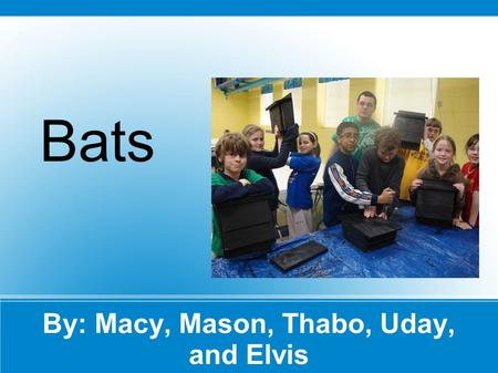 By: Macy, Mason, Thabo, Uday, and Elvis Bats. Bats Life Cycle A brown bat's life cycle has many steps. Baby bats are born after about 50-60 days in their.