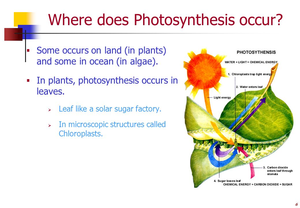 where does photosythesis occur In the case of photosynthesis, the following steps occur, which create glucose for respiration from the carbon dioxide introduced into the cycle.