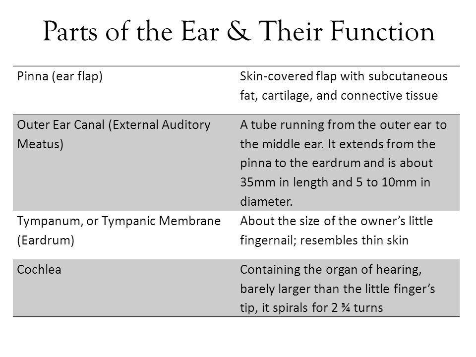Parts of the inner ear and their functions