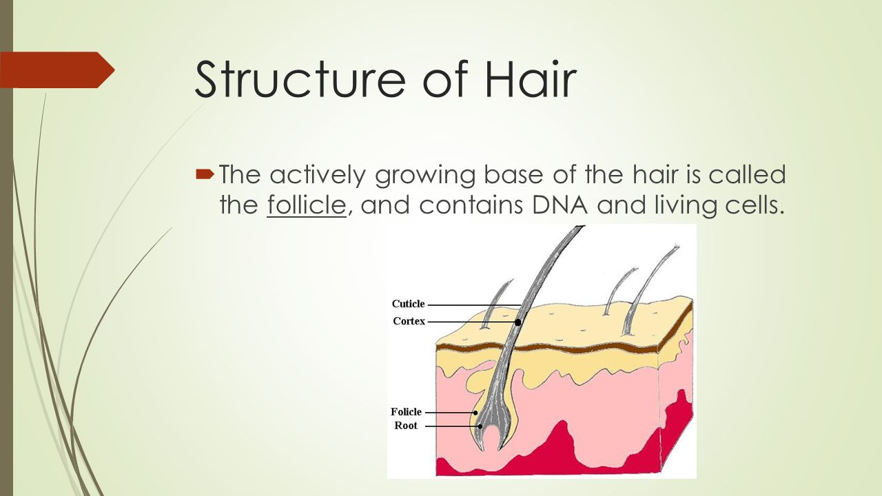 Hair Can You Tell The Difference Ppt Download