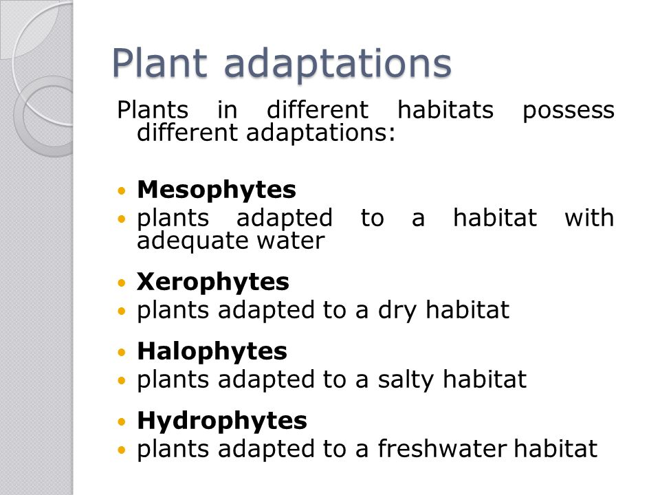how xerophytes are adapted for water Xerophyte: xerophyte, any plant adapted to life in a dry or physiologically dry habitat (salt marsh, saline soil, or acid bog) by means of mechanisms to prevent water.