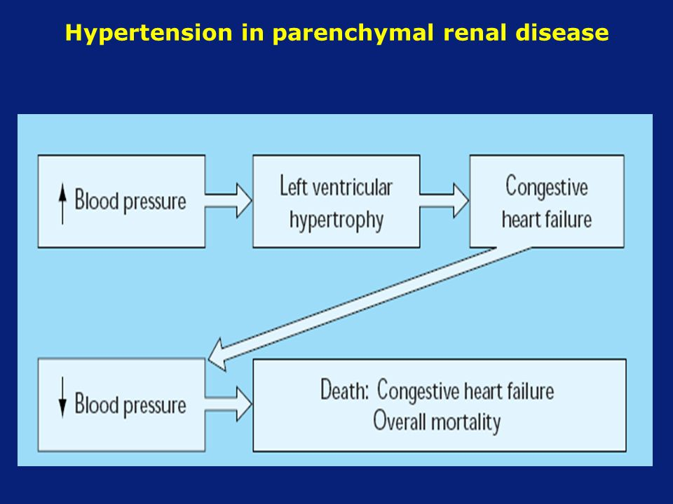 renal and hypertension function relationship