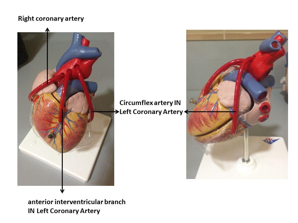 mitral valve disease common source disease heart biology essay Congenital heart defects,  congenital heart defects are the most common type of birth defect  critical congenital heart disease.