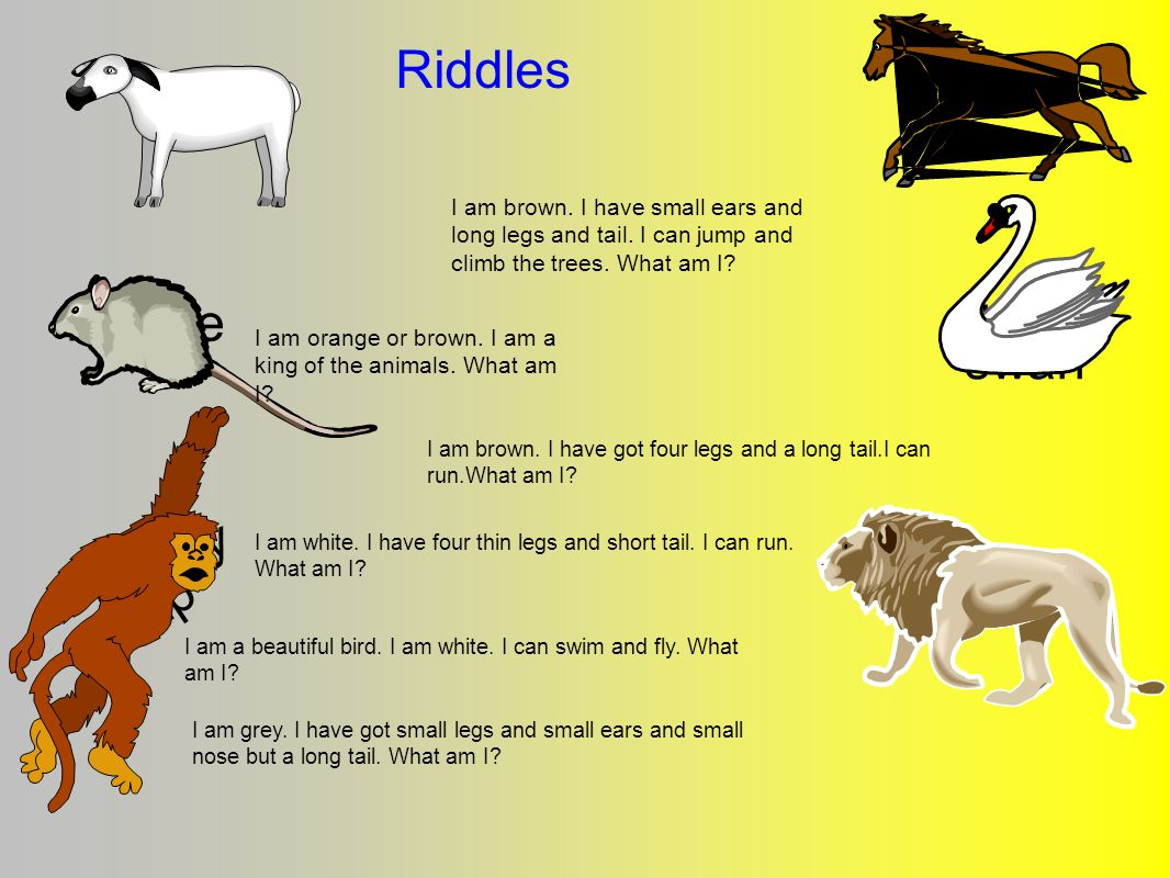 Riddles mouse swan lion horse sheep duck monkey chimp