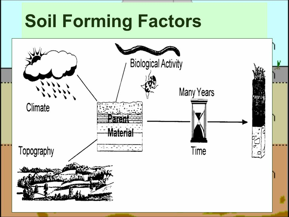 Soil is not dirt ppt video online download for Soil forming factors