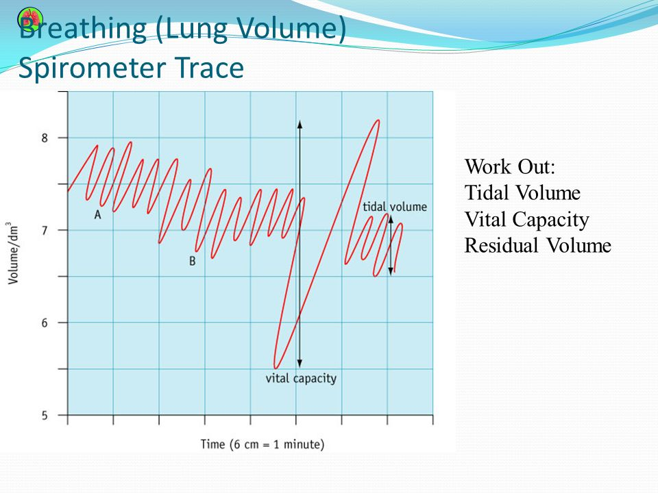 lung volume spirometer activity 1 Physical activity and its effect on forced expiratory volume  help of a spirometer 2  to analyse the effects of physical activity on lung functions in healthy .