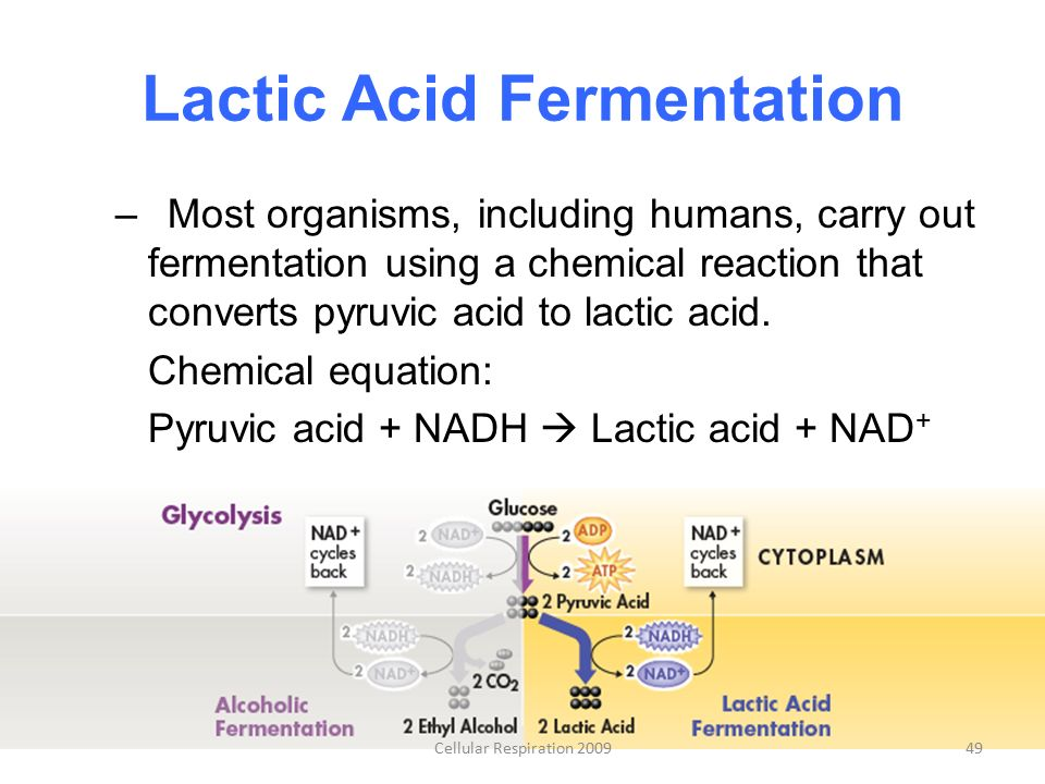 Chapter 9: Cellular Respiration and Fermentation - ppt ...