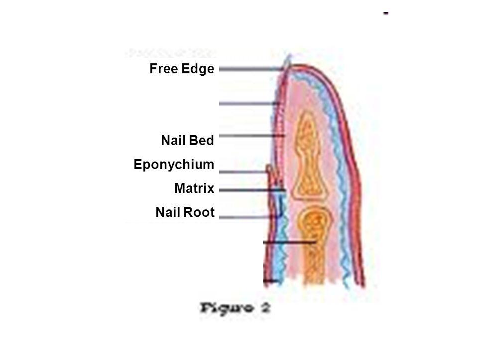 Fantastic What Is Nail Root Inspiration - Nail Art Ideas - morihati.com