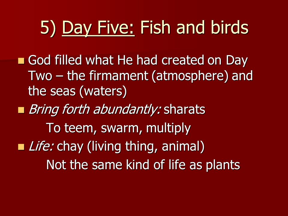 5) Day Five: Fish and birds