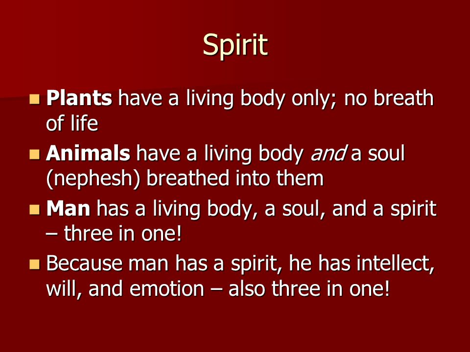 Spirit Plants have a living body only; no breath of life