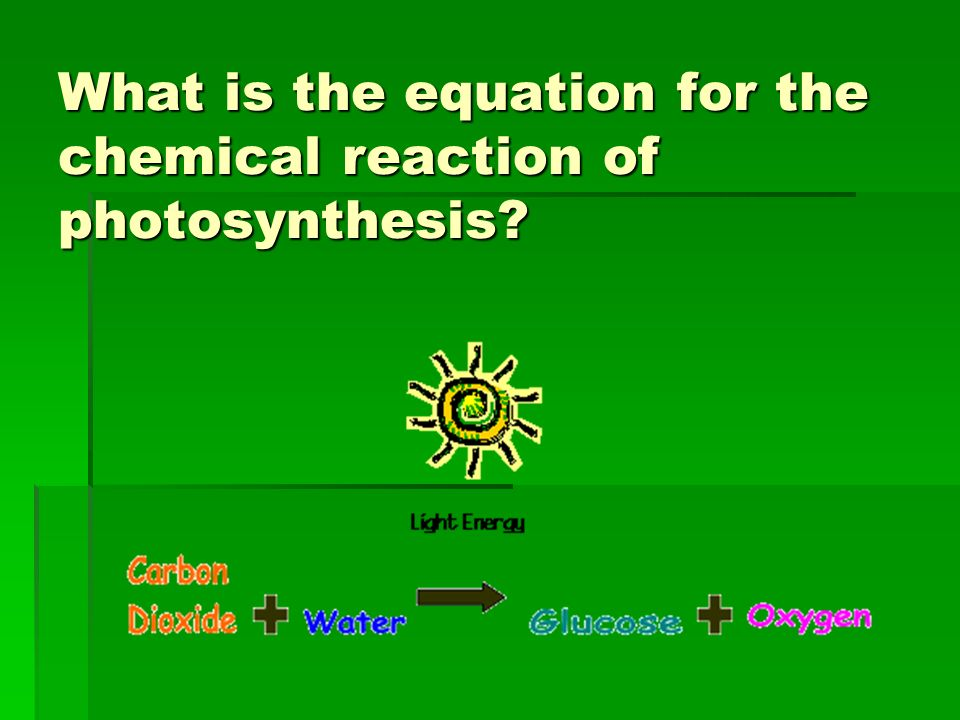 what is the equation for photosynthesis 2018-6-12  the name photosynthesis is derived from greek word which means: photo = light and synthesis = putting together photosynthesis equation represents a scientific process in which light energy emitted by the sun is utilized by the plants and animals to convert light energy into chemical energy.