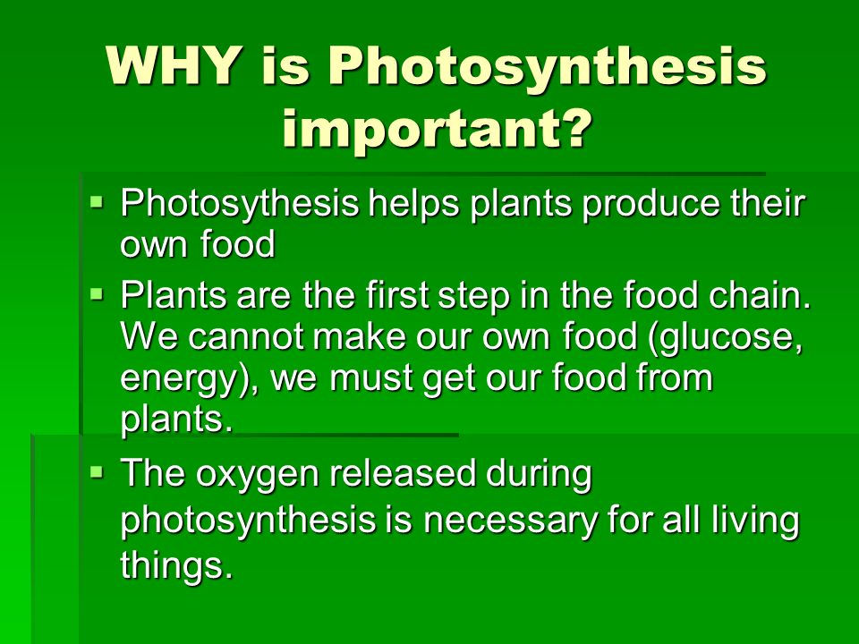 why is photosynthesis important How does photosynthesis help animals survive why then would animals need photosynthesis phrased another way, why do and it's important to remember that.