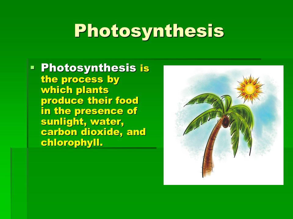 understanding the process of photosynthesis in plants Understand how the world functions in relation to  understanding the concept of  oxygen release by plants  release it through the process of photosynthesis.