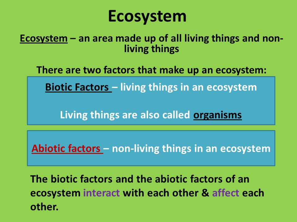Ecosystems ppt video online download for Things made up of soil