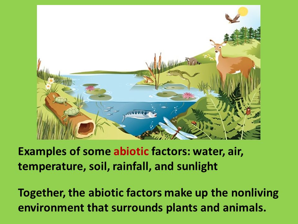 Abiotic factors nonliving things in the environment for Things made up of soil