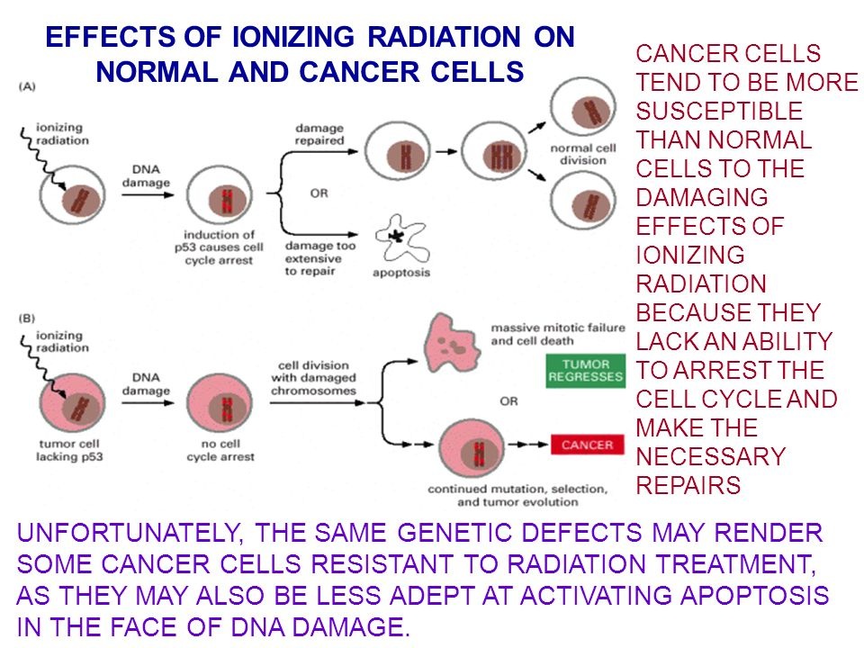 effects of uv radiation on genetic Effects of uv radiation on you positive effects ultraviolet rays have their place in our ecosystem the amount of uv rays the eyes are exposed to is increased.