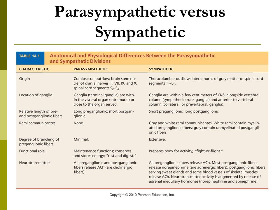 parasympathetic vs sympathetic The parasympathetic nervous system, together with the sympathetic nervous system, constitutes the autonomic nervous system last editorial review: 5/13/2016.