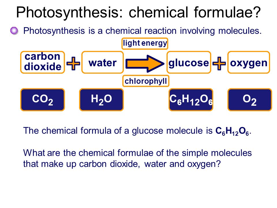 chemical formula for photosynthesis Photosynthesis vs cellular respiration photosynthesis and cellular respiration are both cellular processes organisms use to obtain energy photosynthesis converts the.