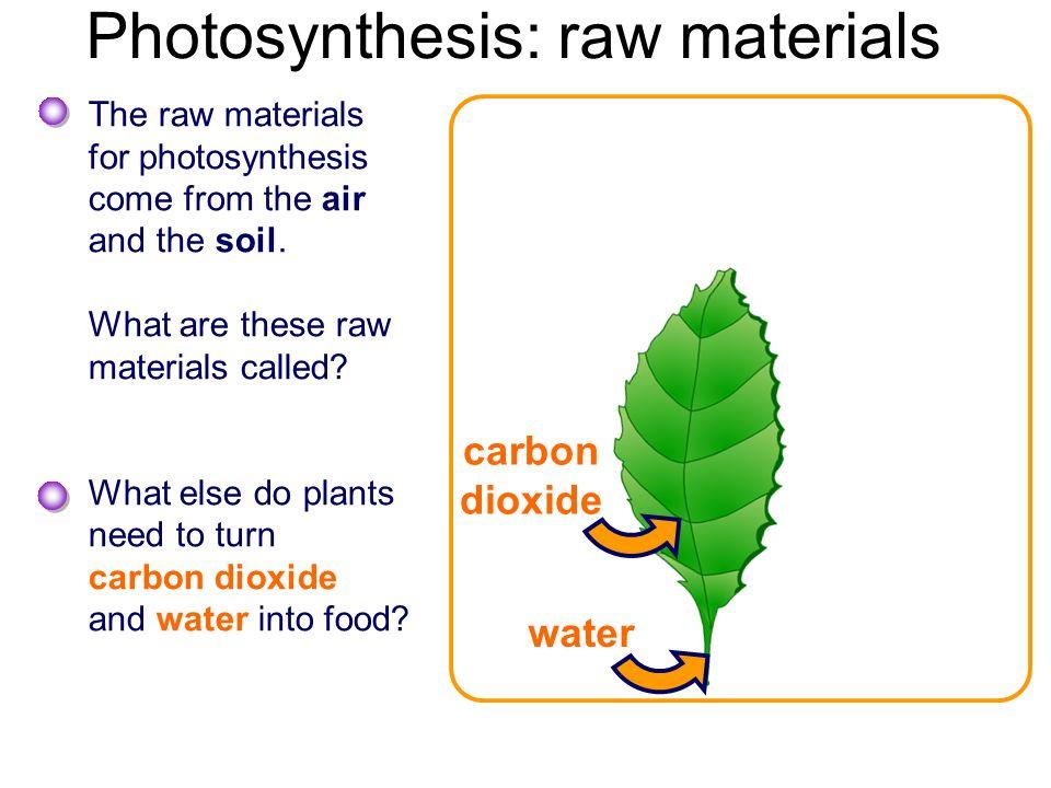 Biology4Kidscom: Plants: Photosynthesis