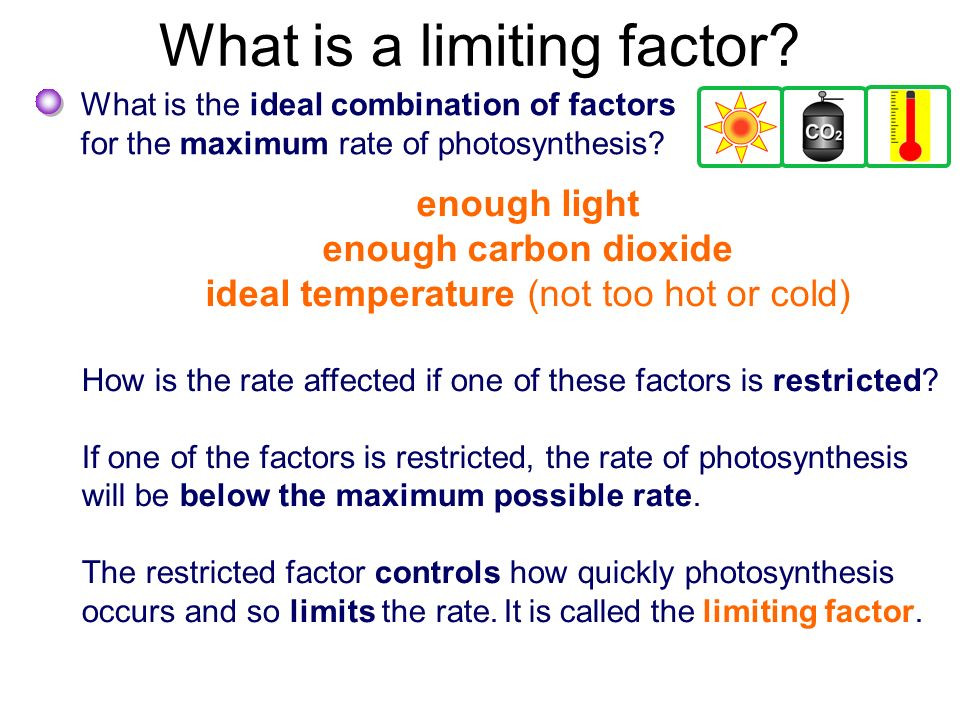 explain and describe what a limiting factor is Cp chemistry theodore roosevelt high school lab #2-6 limiting reagents lab: turning iron into copper introduction as we've seen before, it's possible to predict.