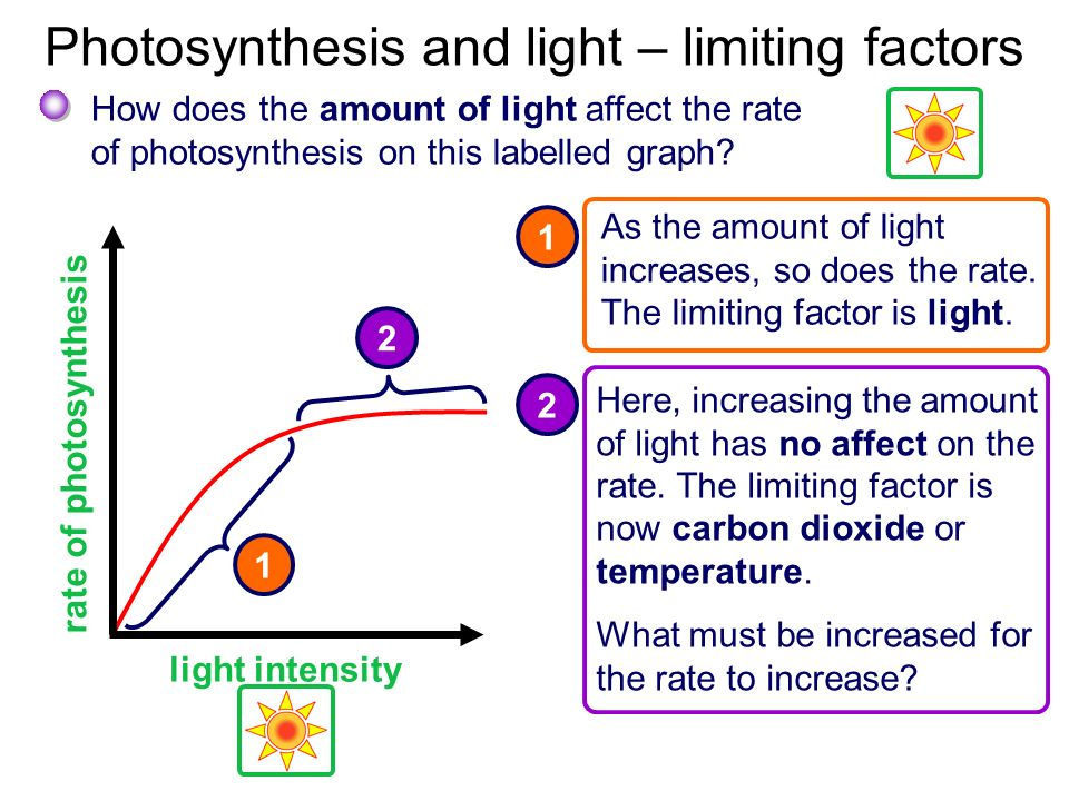 How affect does photosynthesis temperature