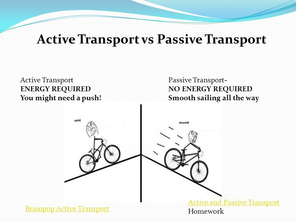 Secondary Active Transport Youtube Rh Youtube Com Simple Active