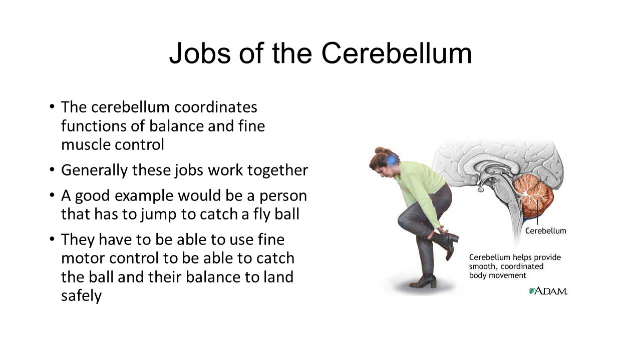the pons and cerebellum - ppt video online download, Sphenoid