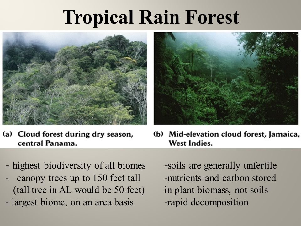 Tropical Rain Forest - highest bioersity of all biomes & Chapter 6 Terrestrial biomes - ppt video online download