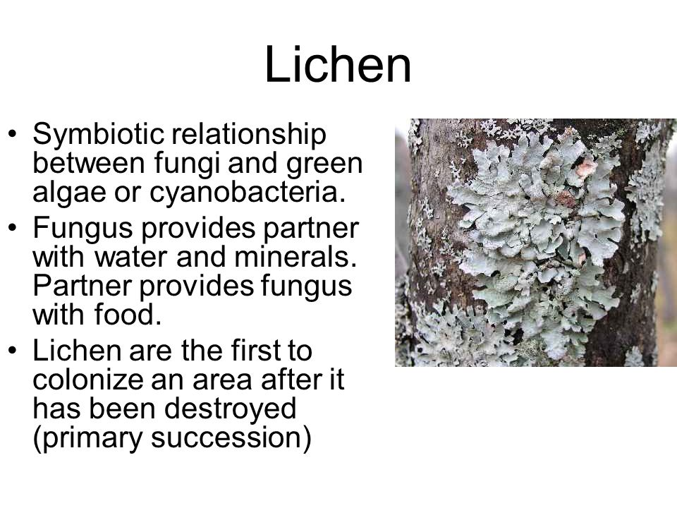 5 differences between algae and fungi relationship
