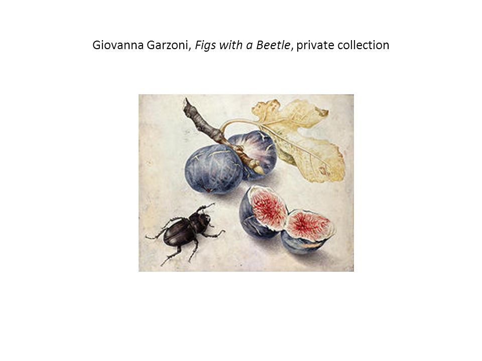 Giovanna Garzoni, Figs with a Beetle, private collection