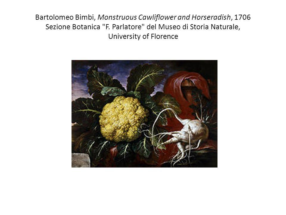 Bartolomeo Bimbi, Monstruous Cawliflower and Horseradish, 1706 Sezione Botanica F.