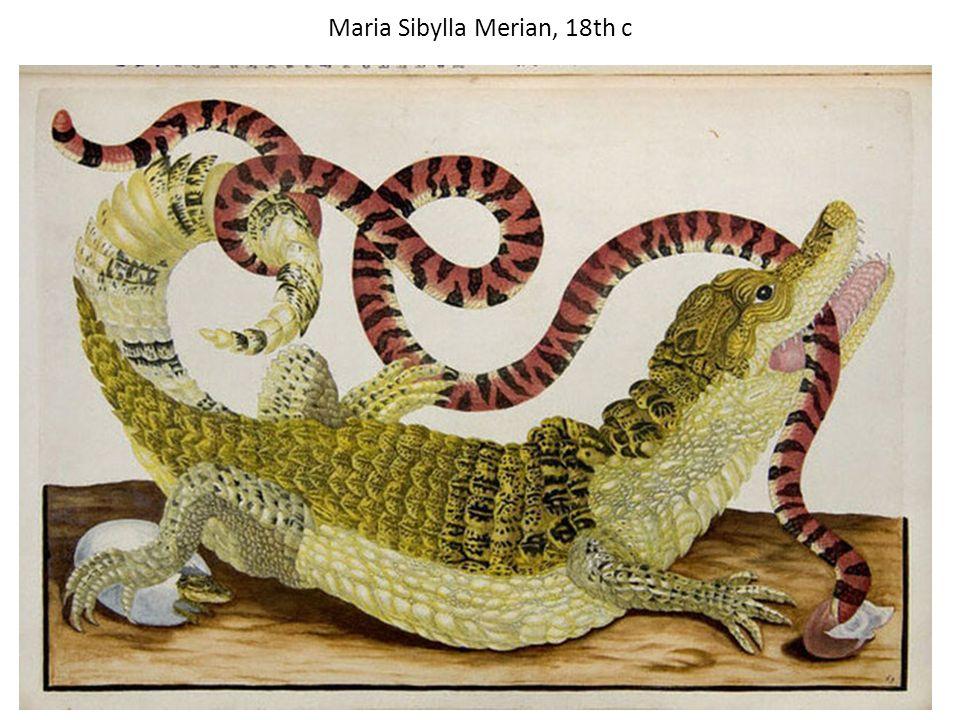 Maria Sibylla Merian, 18th c